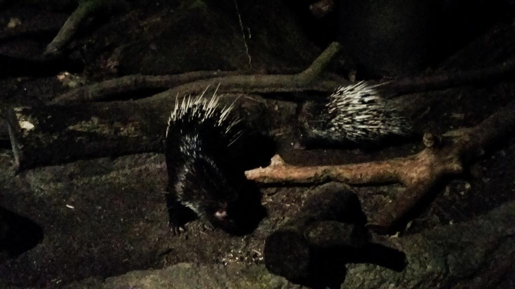 night-zoo